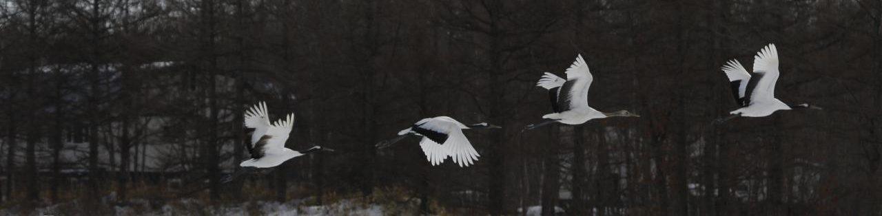(公財)日本鳥類保護連盟 京都